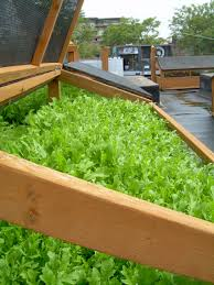 garden pleasurable rooftop garden ideas with greenes fence