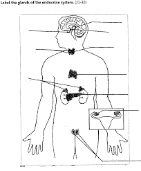 Endocrine System Concept Map The Endocrine System Endocrine System Human Anatomy Charts