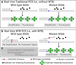 principle of real time wtb pcr diagrammatic sketch showing the