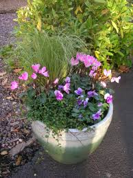 create a pretty autumn container sprout gardens blog