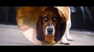 cone solidarity no more shame for dogs in cones youtube