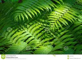 Free Picture Leaf Nature Fern Fern Nature Background Stock Image Image Of Green Pattern 42342487