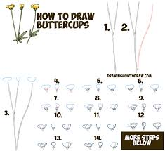 how to draw a buttercup flower step by step drawing tutorial