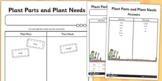 plant parts and plant needs cut and stick activity sheet cut