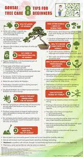 bonsai tree care 8 tips for beginners infographic bonsai tree