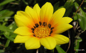 Beautiful Flower Pictures Latest Flower Wallpapers