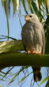 backyard birding in merida yucatan and beyond u2013 nifty shades of