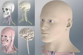 3d Human Anatomy Zygote Solid 3d Human Anatomy