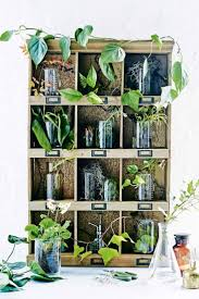 Apartment Plants 167 Best House Plants Gardening Zero Waste Images On Pinterest