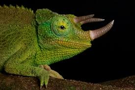 facts about the chameleon that u0027ll leave you dumbstruck