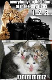Smiling Cat Meme - smiling cats getting picture taken by cat animals pinterest