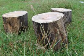 How To Build A Stump by How To Make A Stool From An Old Tree Trunk 7 Steps