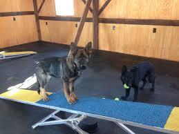 dog barn facilities synergistic dog training llc cooperative dog