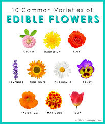 edibles flowers we give you a list of edible flowers their unique tastes and how