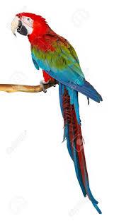 cartoon cockatiel the 25 best parrot cartoon ideas on pinterest how to draw owl