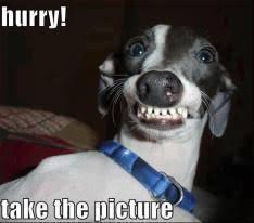 Dog Smiling Meme - funny smiling dog picture