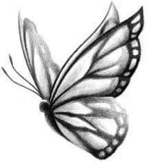 butterfly drawings butterfly sketch quickly and easily