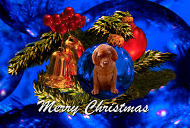 christmas 2016 u2013 hungarian vizsla welfare charity