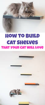 Help I Accidentally Build A Shelf Know Your Meme - how to build cat shelves that your cat will love brooklyn farm girl