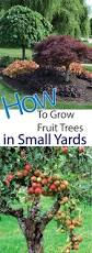 exciting small backyard orchard pics inspiration amys office
