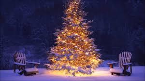 christmas christmas trees on sale bucilla needlepoint stockings