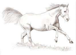 drawn horse basic pencil and in color drawn horse basic