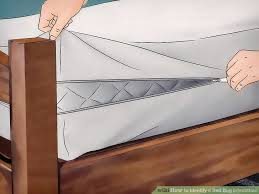 Bed Bugs In Mattress How To Identify A Bed Bug Infestation With Pictures Wikihow