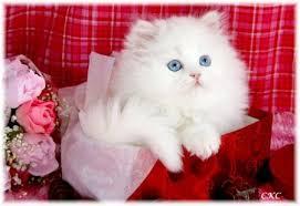 حبايبي القطط Images?q=tbn:ANd9GcQ5VuwSqN9RcDenZy6rmTR8CND9rVmPeNbnpB471-V55hIu5GZf_w