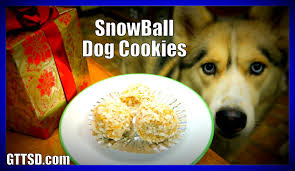 diy snowball dog cookies snow dogs snacks 40 no bake dog