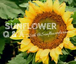sunflower questions answered part 2
