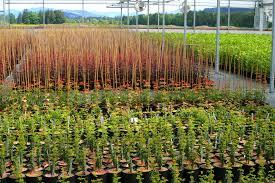 heritage seedlings our plants