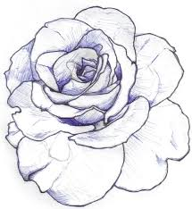 rose drawing outline free download clip art free clip art on