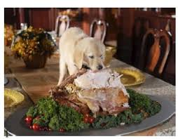 thanksgiving safety for your dogs animals deserve better paws