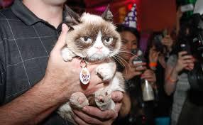 Meme Generator Grumpy Cat - movie star grumpy cat has some life advice for you grumpy cat meme