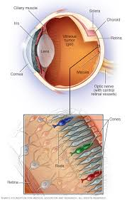 retinal diseases symptoms and causes mayo clinic