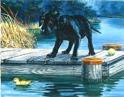 forget the ball lab pup on dock 11 u0027 u0027x14 u0027 u0027 beginner paint by