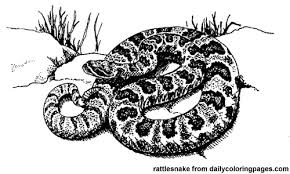 rattlesnake animal coloring pages vitlt com