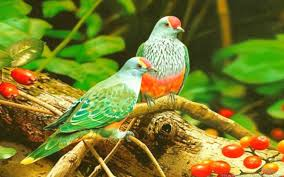 the world of birds beautiful colorful birds hd wallpaper for