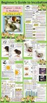 154 best 4h images on pinterest a chicken chicken coops and