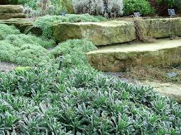 backyard ideas simple rock garden designs rock garden designs to