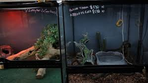 Seeking Lizard How To Set Up A Snake Aquarium Decor Dazzling Snake