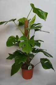 small plant supports leena green specialist