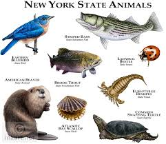 New York wild animals images Full color illustration of a state animals of new york animals jpg