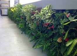 Vertical Gardens Miami - 85 best vertical gardens by wallscapes images on pinterest
