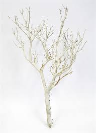 manzanita tree branches sandblasted manzanita branches 18 blooms and branches