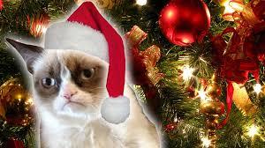 grumpy cat s worst trailer daily rehash ora tv