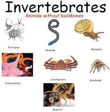 let u0027s go invertebrate animals