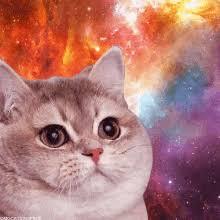 Fat Cat Heavy Breathing Meme - breathing hard gifs tenor