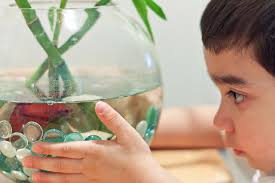 How To Clean Fish Tank Decorations How To Clean A Dirty Fish Tank The Right Way