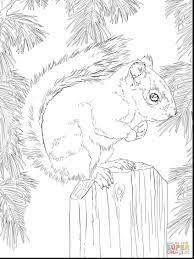 awesome cute squirrel coloring pages printable with squirrel